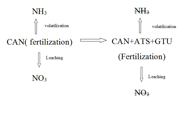Effects of ammonium thiosulfate and guanyl thiourea as calcium ammonium nitrate inhibitors on fertilization and plants